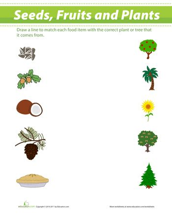 Essay on Benefits of Planting Trees for Children and Students